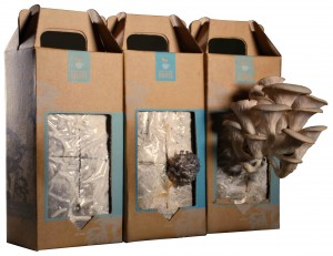 Back to the Roots_Mushroom Kits_Growth Pictures
