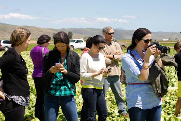 Food bloggers in Dole field