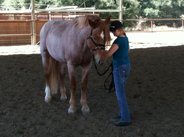 With a horse doing an equus coaching session