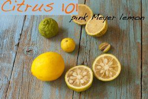 Pink Meyer lemon