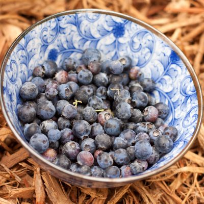 Tempting Tuesdays: home-grown blueberries