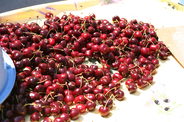 FranceCherries